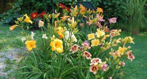 Plantas: 5 flores de verão para adicionar mais cor ao jardim