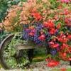 flores e plantas de verao